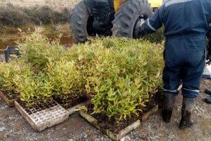 contabilización plantas